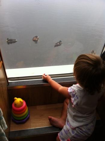 בוקר טוב עולם יש ברווזים באגם