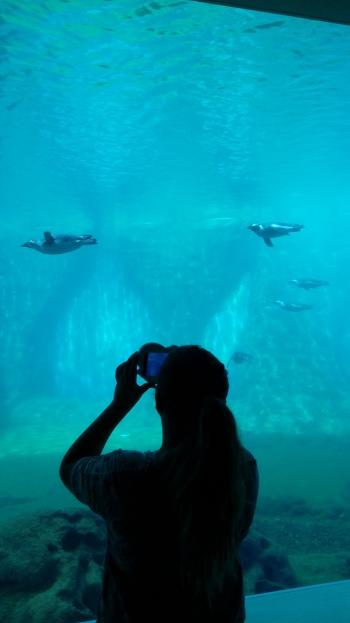 פינגווינים מחייכים למצלמה