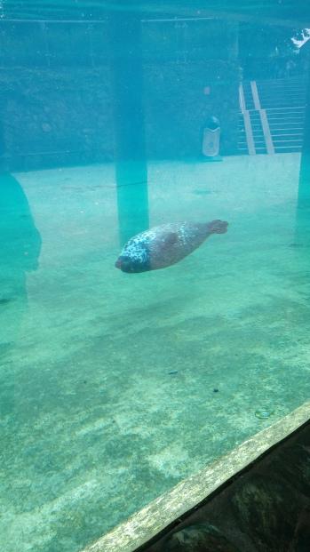 מגוון ענק של חיות ים