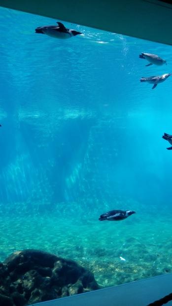 הפינגווינים בגן החיות